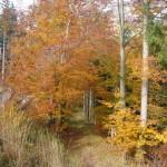 Gruenes-Band-zwei-Laender-Eiche